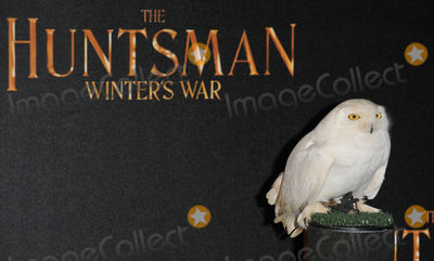 Photo - The Huntsman Winters War film photocall
