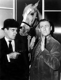 Alan Young Photo - Alan Young (R) in a Scene From Mister Ed Supplied by RangefindersGlobe Photos Inc Movie Stills